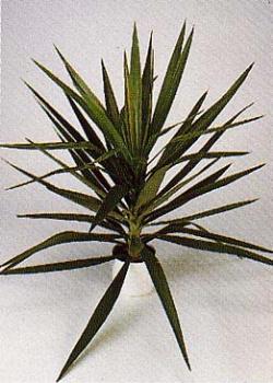 Роль комнатных растений в интерьере